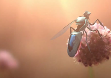 greenpeace - Superbe 3D avec New Bees 2