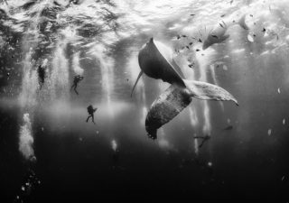 10 gagnants du National Geographic 2015