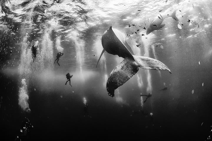 gagnants-national-geographic-2015-1