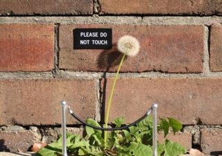 Des drôles de signes aux quatre coins de la ville