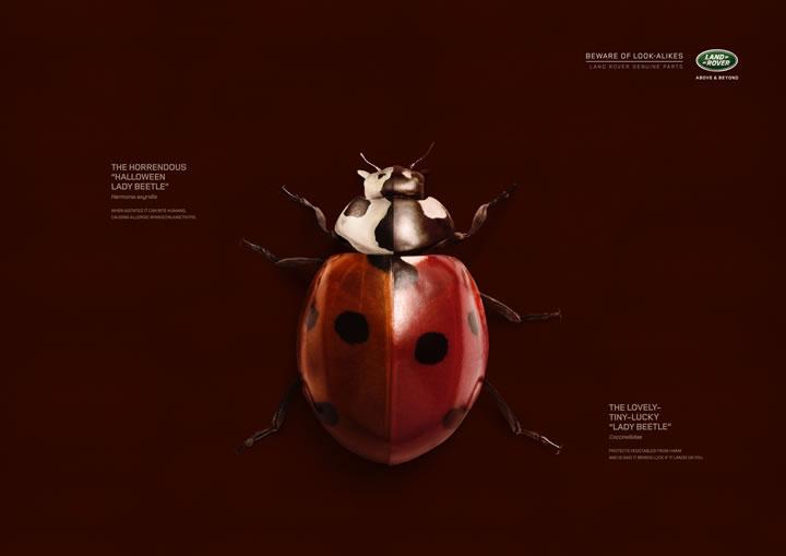 print-creatif-septembre-2015-olybop-68
