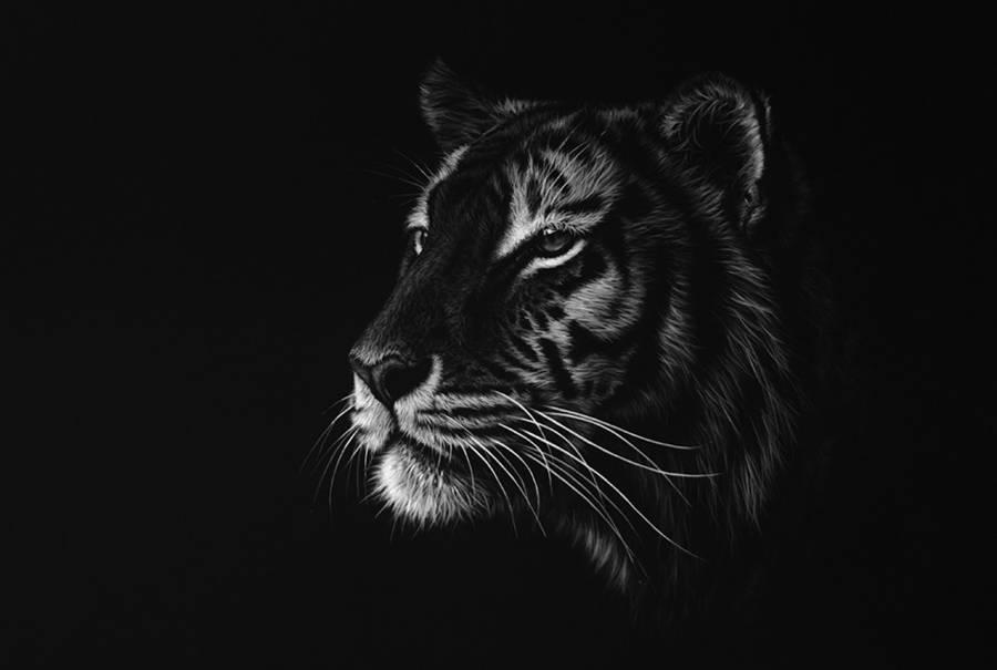 dessin-animaux-noir-blanc-Richard-Symonds-2