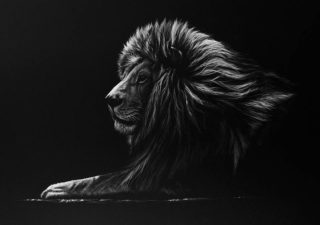 Dessins réalistes noirs & blancs d'animaux sauvages de Richard Symonds 1