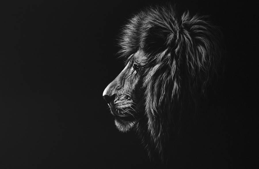dessin-animaux-noir-blanc-Richard-Symonds-6