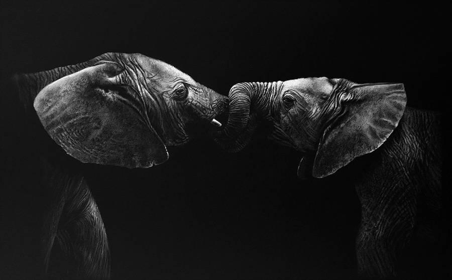dessin-animaux-noir-blanc-Richard-Symonds-7