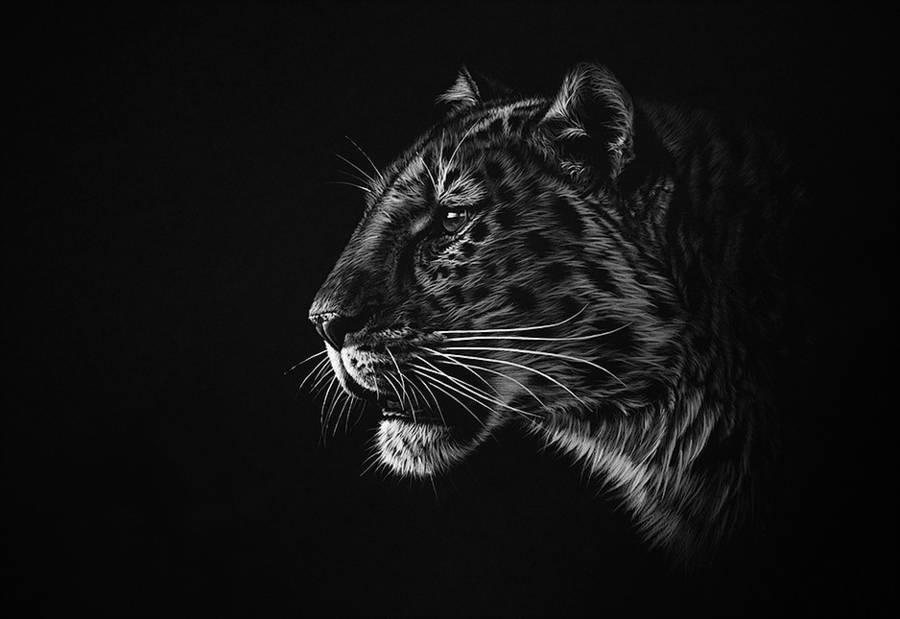 dessin-animaux-noir-blanc-Richard-Symonds-9