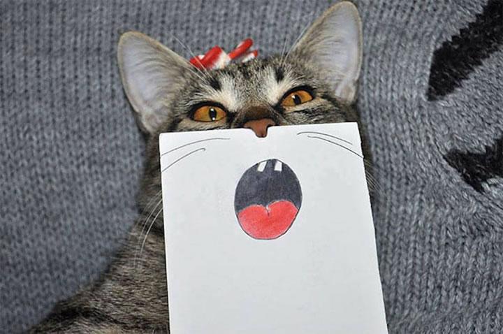 chat-cat-visage-papier-3