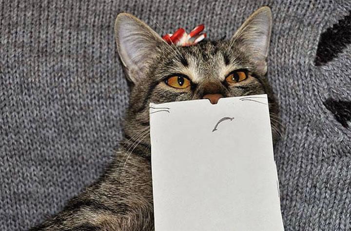 chat-cat-visage-papier-4