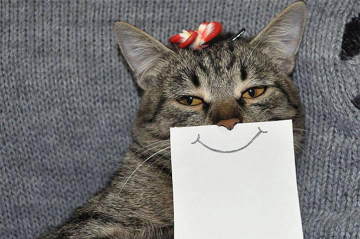 chat-cat-visage-papier-5