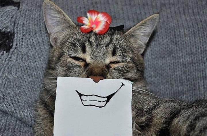 chat-cat-visage-papier-7