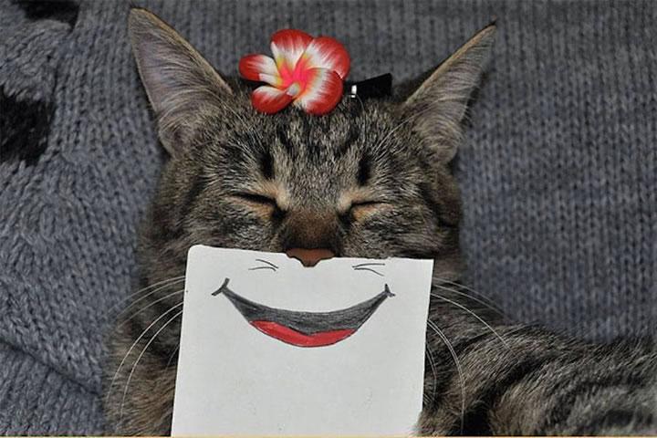 chat-cat-visage-papier-8