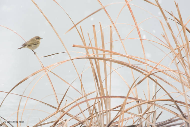 carlos-perez-naval-wildlife-photographer-2016
