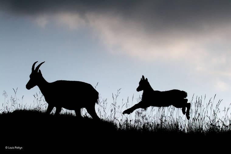 louis-pattyn-wildlife-photographer-2016
