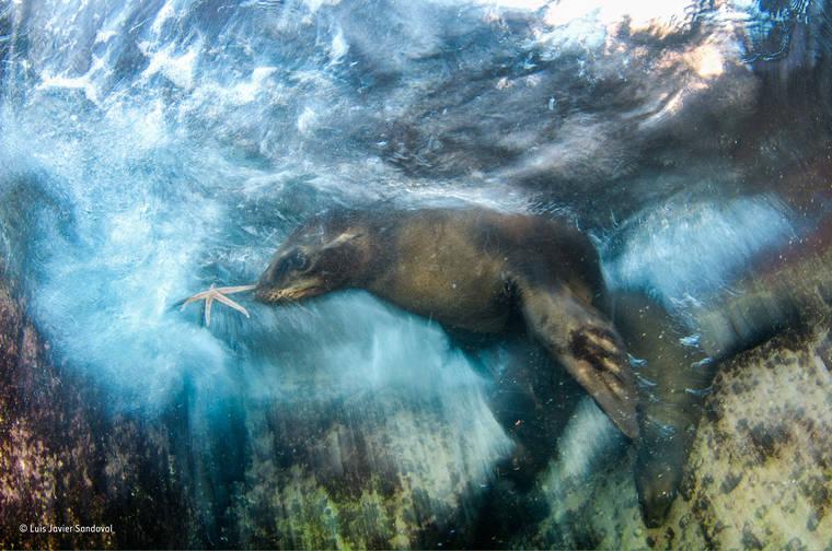 luis-javier-sandoval-wildlife-photographer-2016