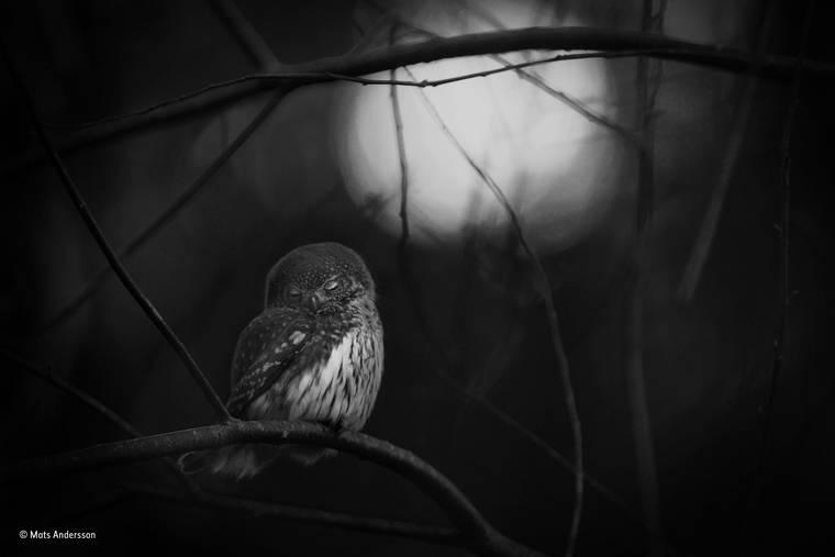 mats-andersson-wildlife-photographer-2016