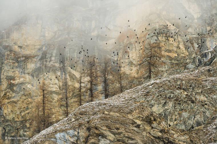 stefano-unterthiner-wildlife-photographer-2016