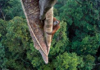 Les 18 gagnants du Concours Photos Wildlife Photographer 2016