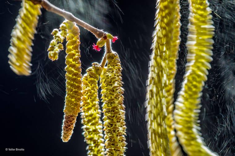 valter-binotto-wildlife-photographer-2016