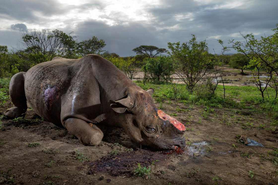national-geographic-2016-brent-stirton-3