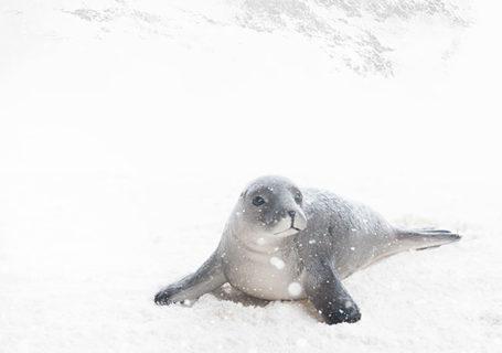 Photographies : Comment créer des photos réalistes d'animaux... Depuis une chambre 8