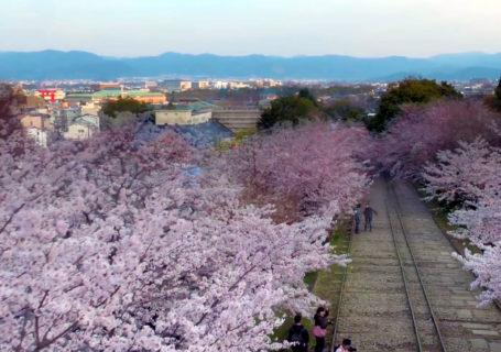 Timelapse de la floraison des cerisiers du Japon vue d'un Drone 4