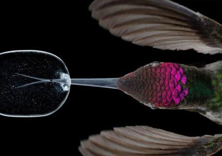 Slowmotion 3000 fps : Superbes images de la vie d'un Colibri 3