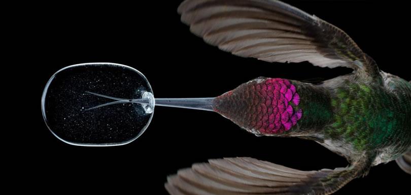 colibri-slow-motion