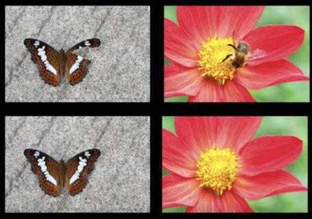 """Sneak Peek Photoshop : nouveautés """"effacer un élément d'une photo"""" 12"""