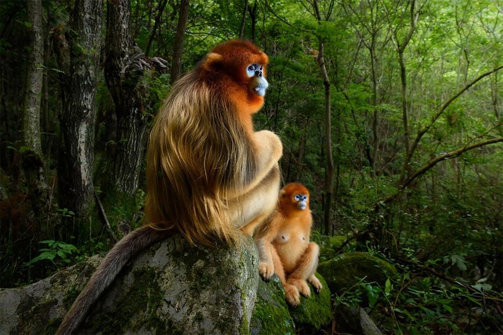Les plus belles photos d'animaux de 2018 5