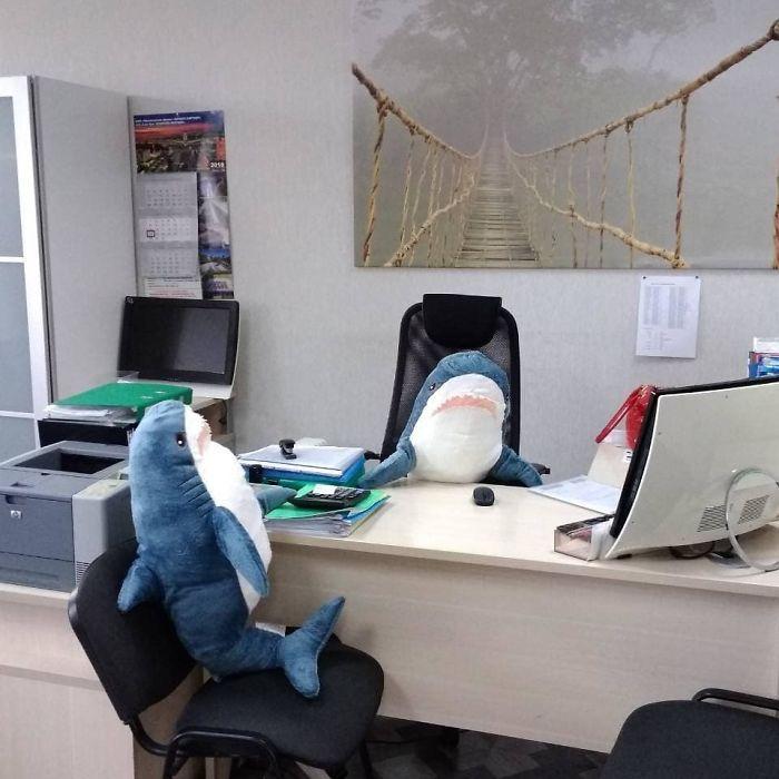 Quand la nouvelle peluche requin Ikea Blåhaj devient Viral 8