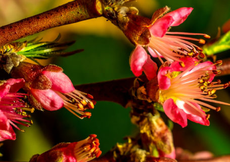 Timelapse - Superbes éclosions de fleurs 10