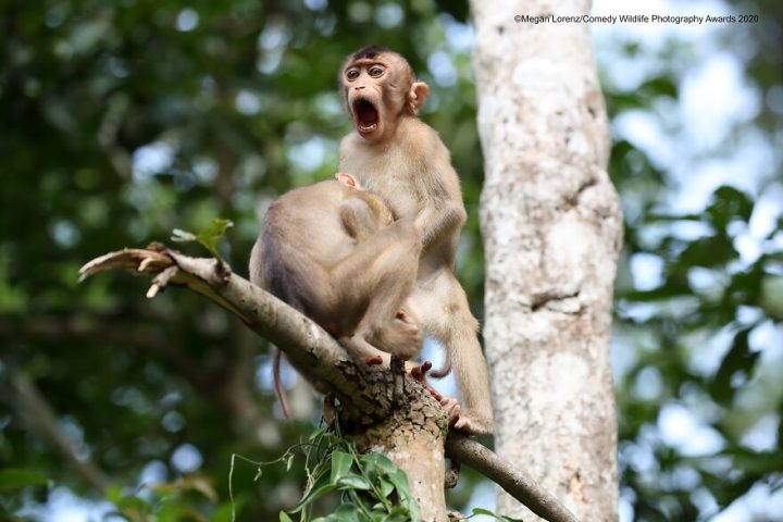 Les gagnants du Comedy Wildlife Photography Awards 2020 11