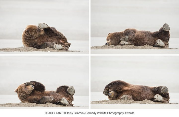 Les gagnants du Comedy Wildlife Photography Awards 2020 10
