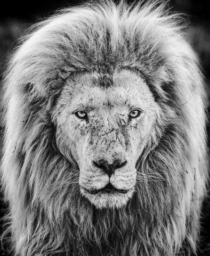 Les superbes photos noir & blanc de David Yarrow 2