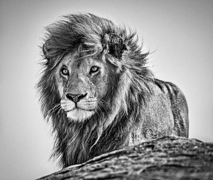 Les superbes photos noir & blanc de David Yarrow 14