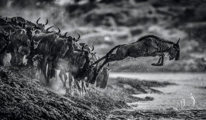 Les superbes photos noir & blanc de David Yarrow 15