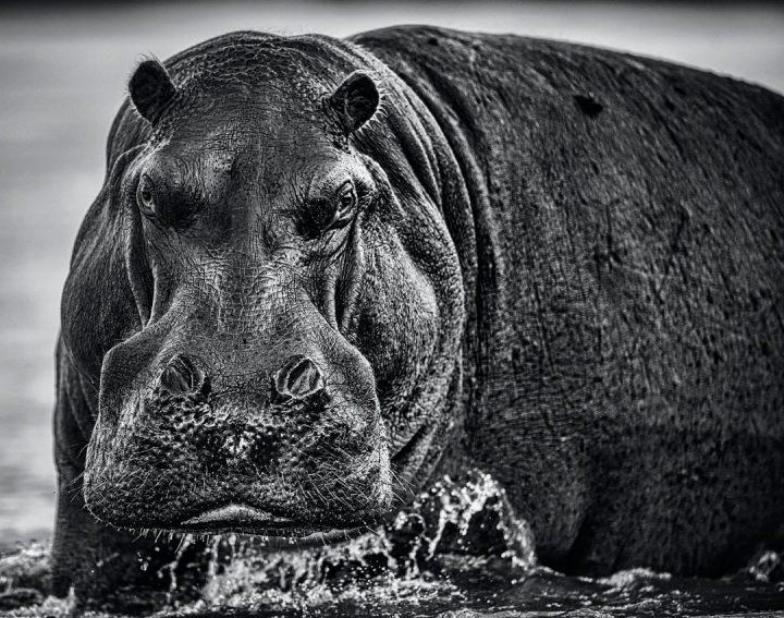 Les superbes photos noir & blanc de David Yarrow 17