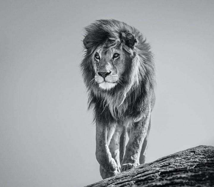 Les superbes photos noir & blanc de David Yarrow 20