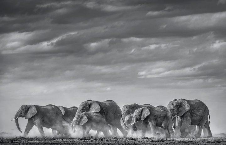 Les superbes photos noir & blanc de David Yarrow 21