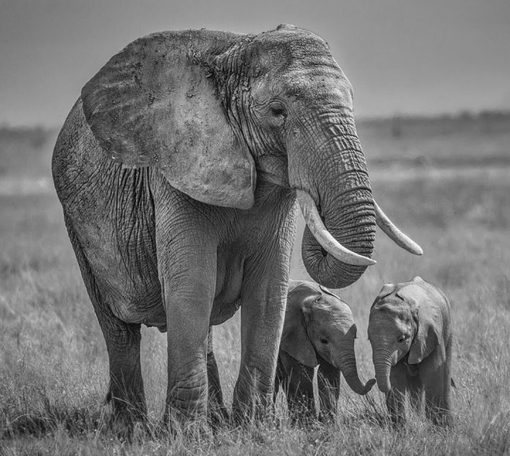 Les superbes photos noir & blanc de David Yarrow 22