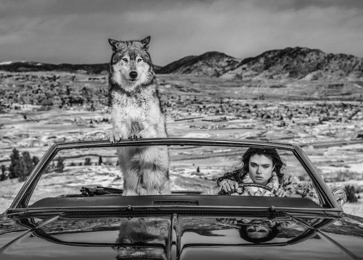 Les superbes photos noir & blanc de David Yarrow 25