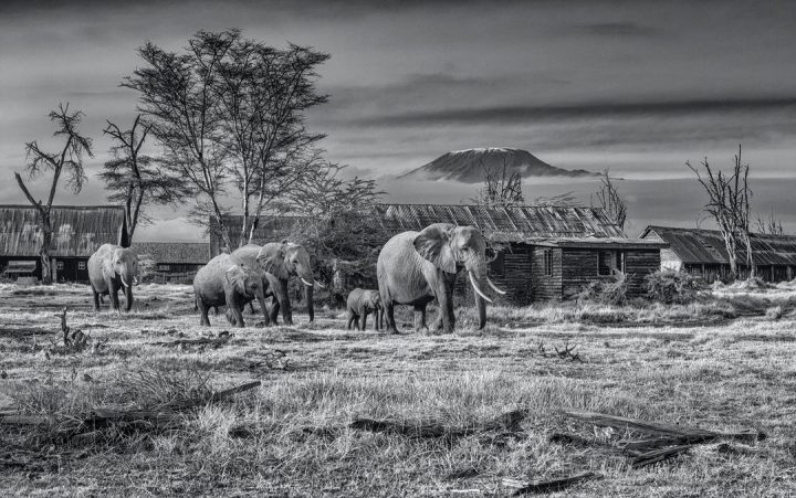 Les superbes photos noir & blanc de David Yarrow 26