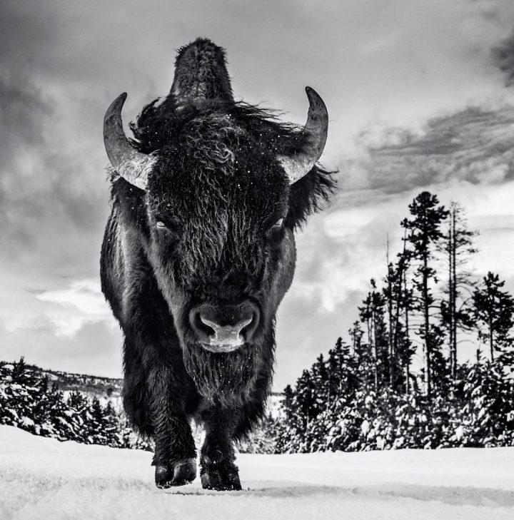 Les superbes photos noir & blanc de David Yarrow 30