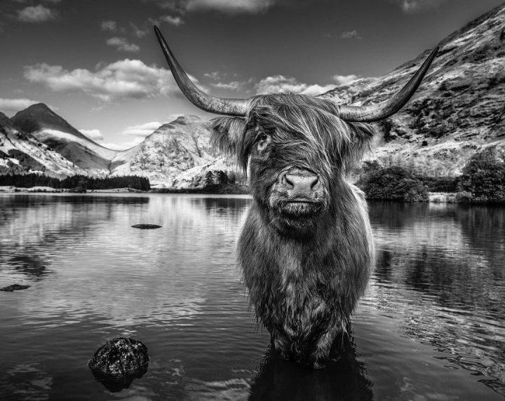 Les superbes photos noir & blanc de David Yarrow 4