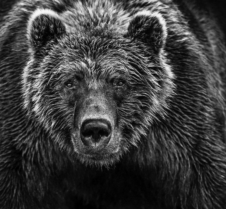 Les superbes photos noir & blanc de David Yarrow 32