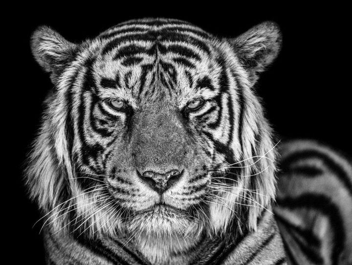 Les superbes photos noir & blanc de David Yarrow 35