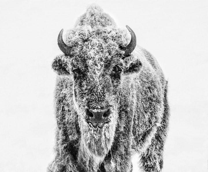 Les superbes photos noir & blanc de David Yarrow 42