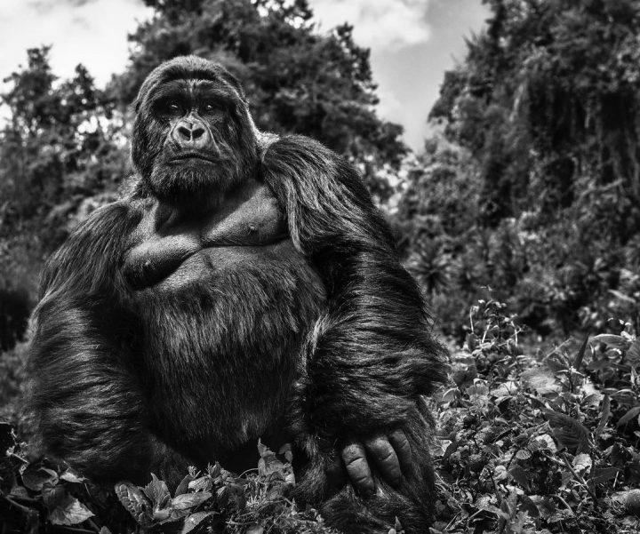 Les superbes photos noir & blanc de David Yarrow 43