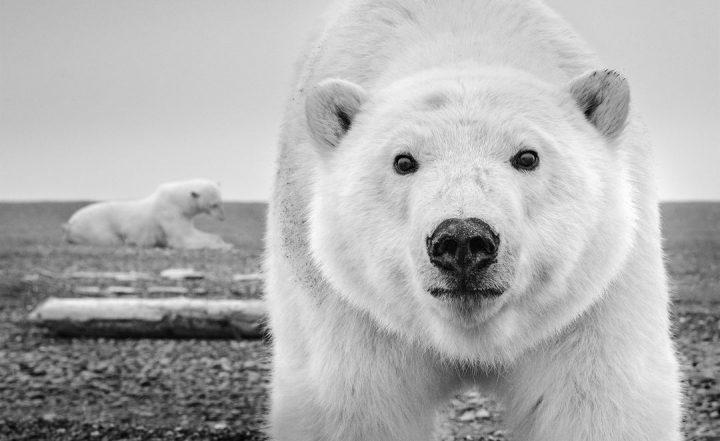 Les superbes photos noir & blanc de David Yarrow 44