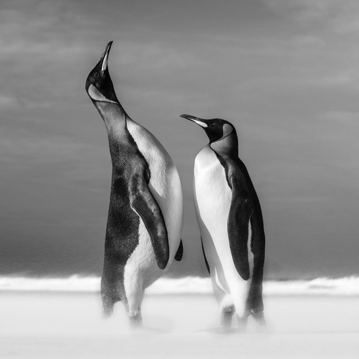 Les superbes photos noir & blanc de David Yarrow 45